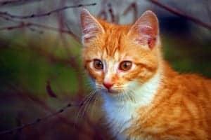 cat-1099705_1920