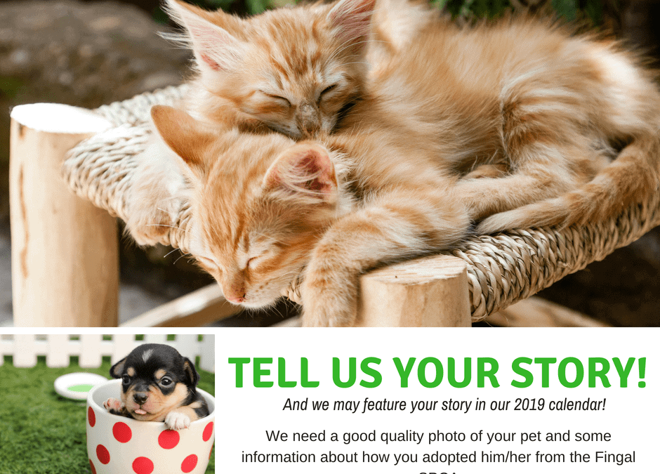 We want YOUR cat!