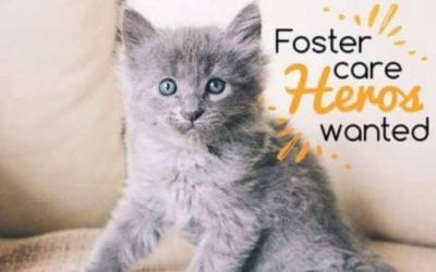 Foster Heroes Needed