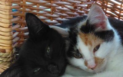 Missy and Pawlina