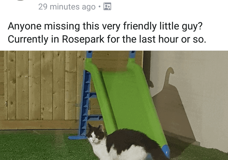 Cat found Rosepark, Balrothery, Balbriggan.