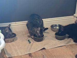 three kittens need a home