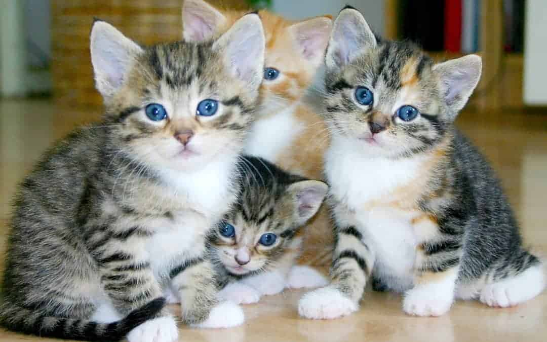 Guide for the Arrival of Your Cat or Kitten