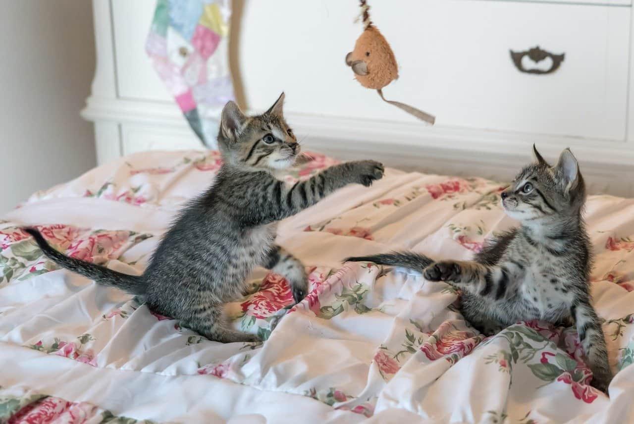 kittens, cats, foster