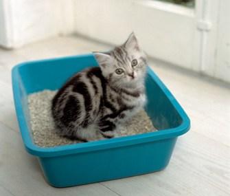 cat-litter-ABFB05-335sm41113