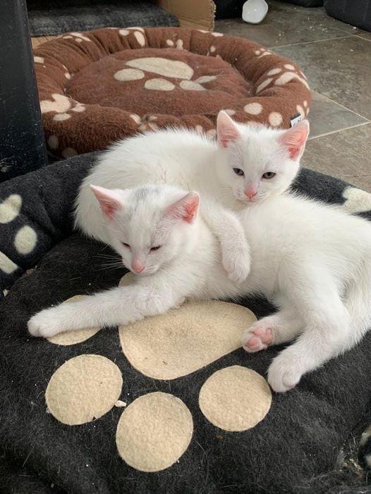 Kittens in Mary Joe's 19 July 2021